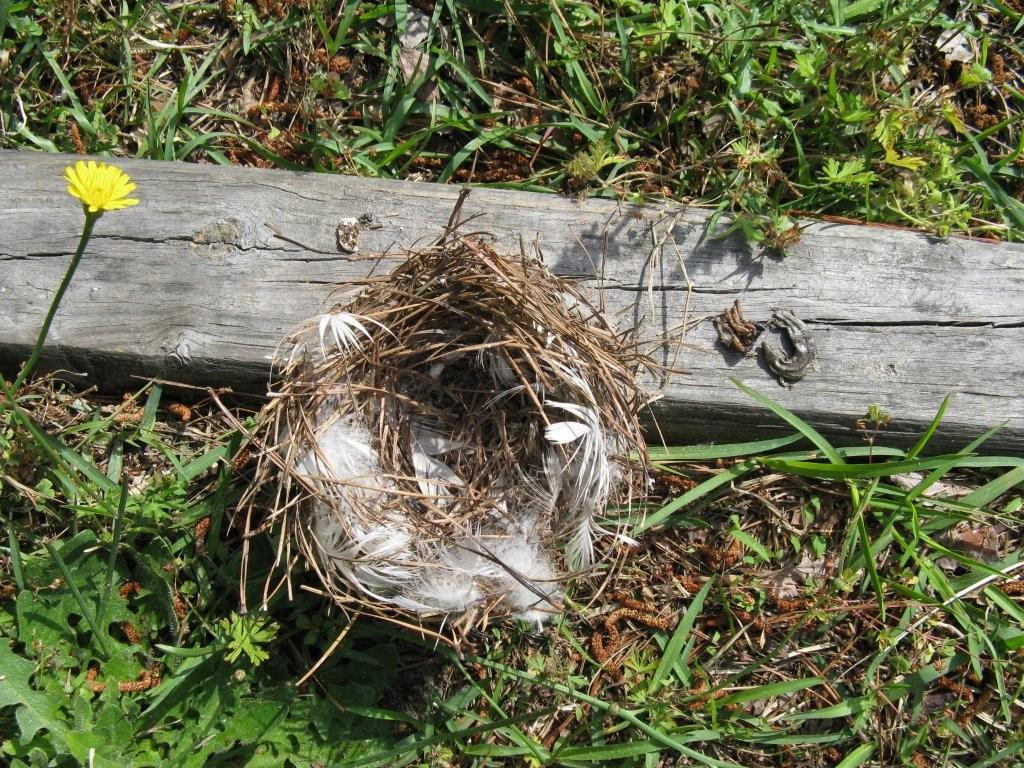 empty-nest.jpg